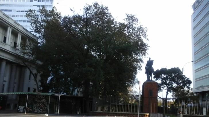 Árboles frutales en espacios públicos
