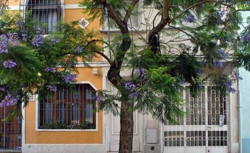 La ciudad, sus árboles y la poda