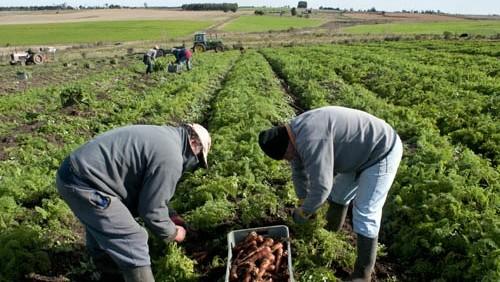 Cumbre de la FAO analizará las vías para la erradicación del hambre en el mundo