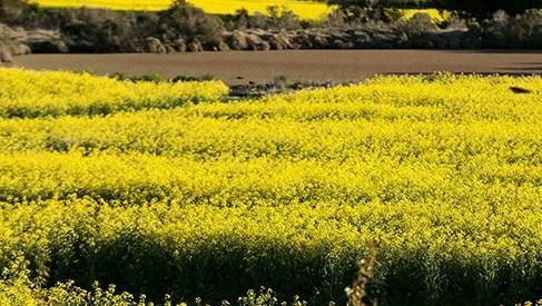 Una evaluación de la cosecha de soja