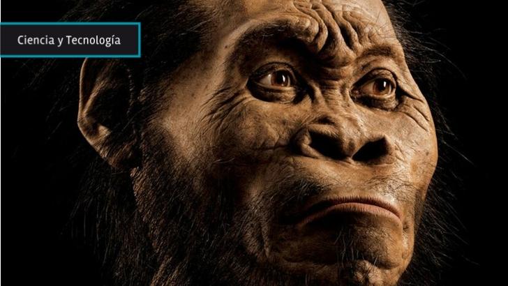 Homo naledi: Restos hallados son únicos por su volumen de información bien conservada