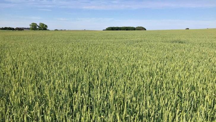 <em>Agro En Perspectiva</em><br>El buen momento de los cultivos de invierno