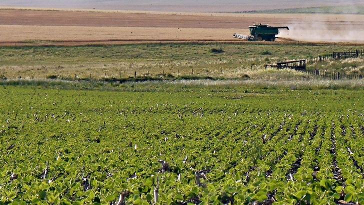 <em>Agro En Perspectiva</em><br>El campo a fin de año: ¿Qué es lo que vemos desde la ruta?