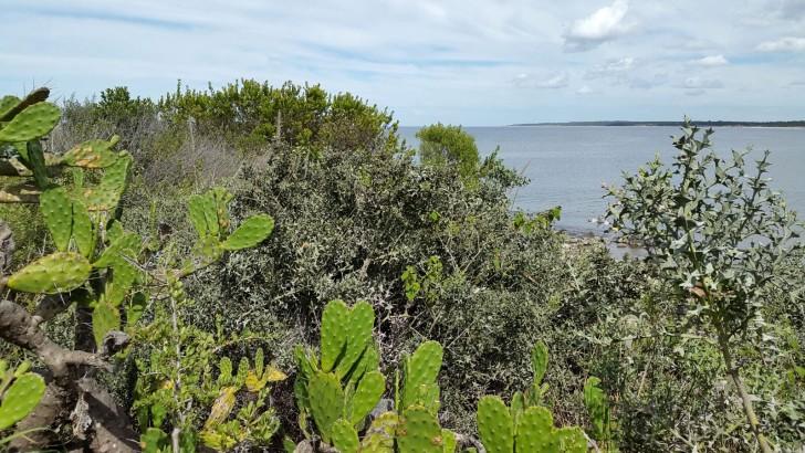 Bosque costero autóctono: Tan atractivo como desconocido y agredido