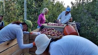 La Mesa Agropecuaria: Producción familiar y agronegocio: ¿Sinergia o exclusión? (ii)