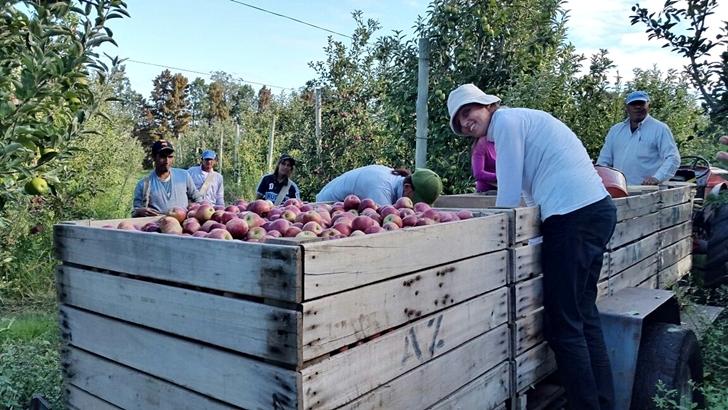 <em>Frutas y Verduras</em><br>Restricción del consumo e importación fuerzan a productores a tirar mercadería
