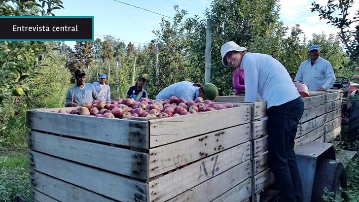 Temporada de manzanas: ¿Cómo es el trayecto de la quinta a la mesa de la principal fruta de producción nacional?