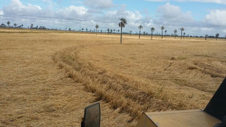 Rocha: Varios cultivos afectados por las lluvias