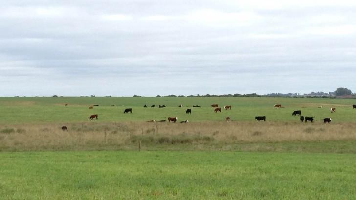 ¿Qué se está haciendo en la ganadería por estos días?