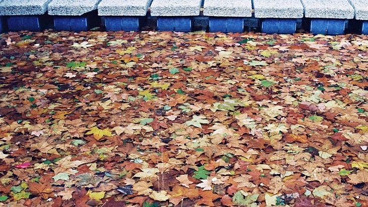 <em>Golpe de vista</em><br>Despacio otoño