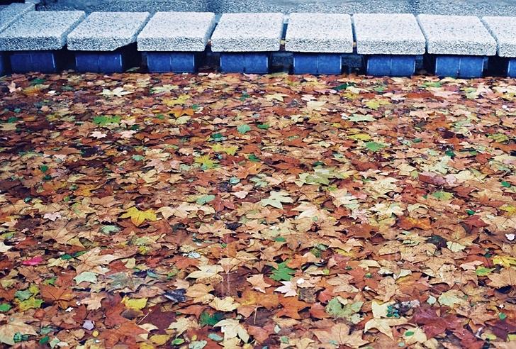 Por favor pisen las hojas.