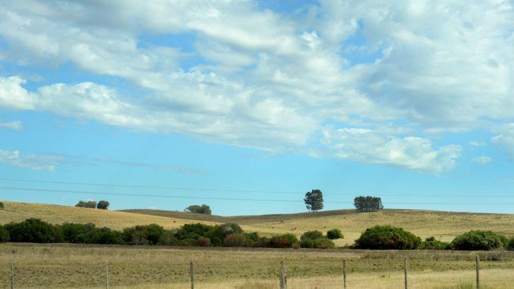 Se recuperó el precio medio de la tierra en Uruguay en el primer semestre de 2019