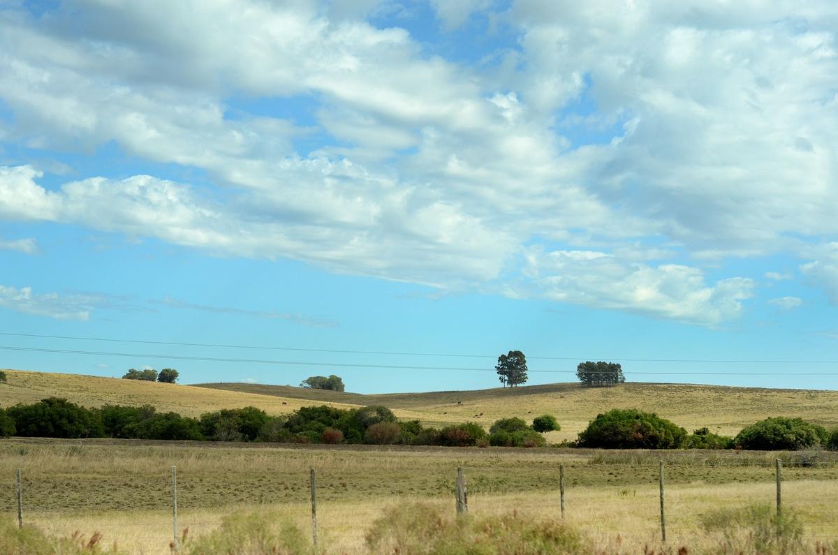 ¿Cómo se comportó el mercado de tierras en el 2020?