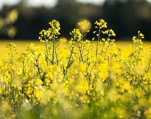 Argentina: Crece el ritmo de la agricultura