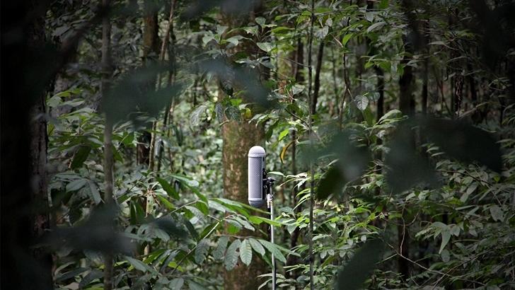 Proyecto acústico por la biodiversidad y pinturas para recordar el genocidio camboyano