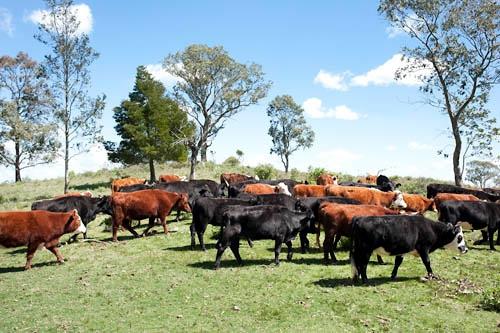 Análisis de los principales números de la ganadería