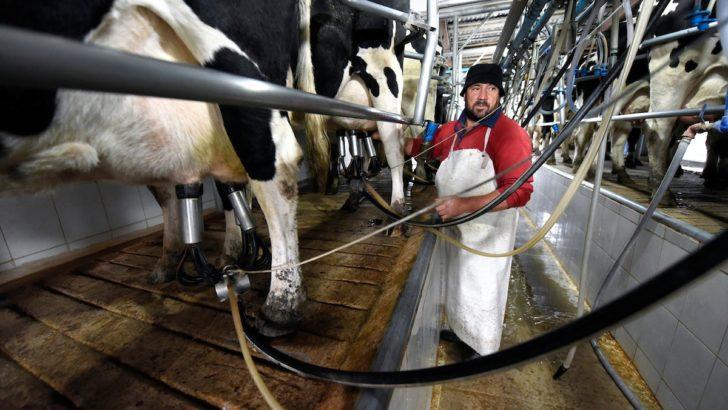 ¿Cuál es la situación del sector lechero?