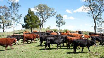 Situación y perspectivas para el sector agropecuario uruguayo