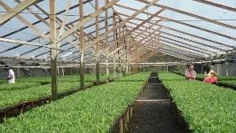 """<em>Ventana al Futuro</em><br>Cultivos energéticos, una forma de """"sembrar y cosechar energía"""""""