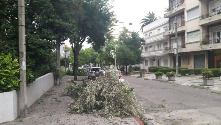¿Cuál es la situación de los árboles de Montevideo tras el temporal?