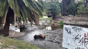 <em>Fotogalería</em><br>Parque Rodó: Alrededores del Franzini y obras de acondicionamiento del lago