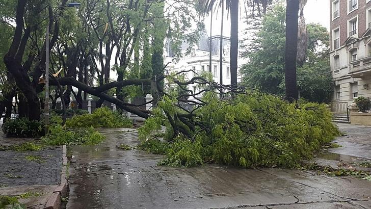 <em>Fotogalería</em><br>Montevideo después del temporal