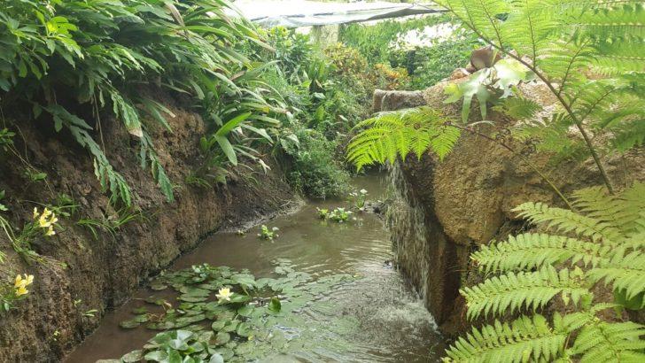 Una recorrida por el Parque Temático Biomas