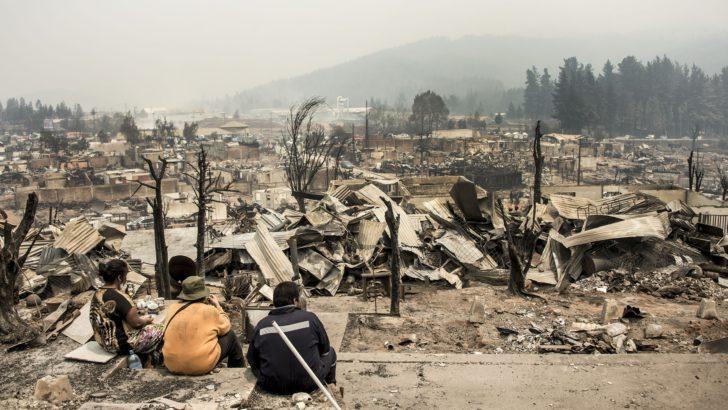 <em>Chile</em><br>Incendios fueron un «atentado contra la flora y fauna» del país, dice comandante de bomberos de O'Higgins