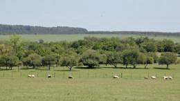 Precio de la tierra en Uruguay registró una nueva baja en 2016