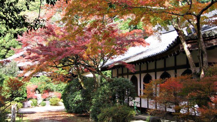 Un paseo imperdible por el Japón de los cerezos en flor