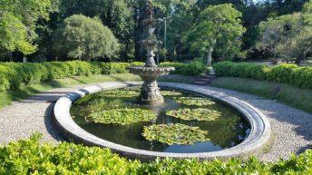 Actividades para adultos mayores en el Jardín Botánico