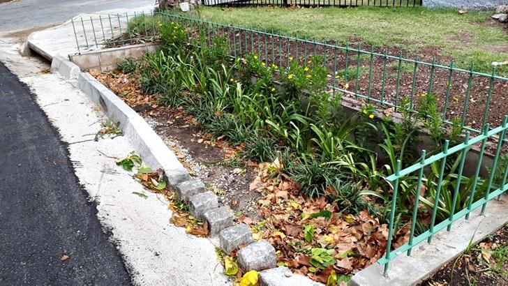 """¿Cómo funcionan los nuevos """"jardines de lluvia"""" que se instalaron en Montevideo?"""