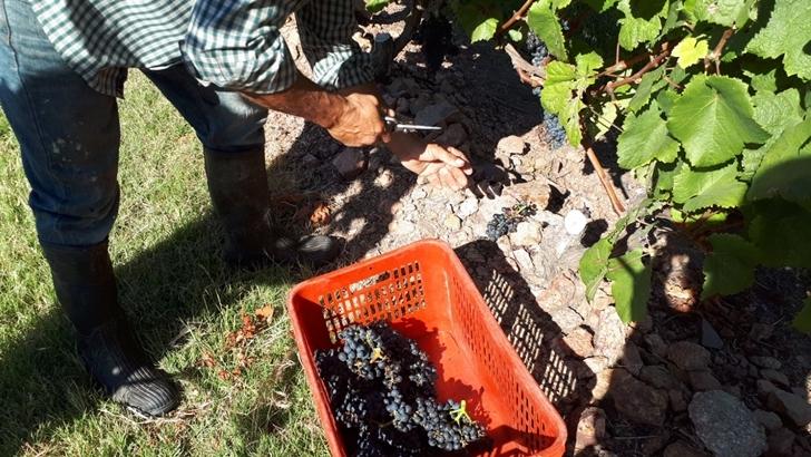 Dos caras del vino nacional en 2018: Una vendimia excelente y un sobrestock acumulado de 30 millones de litros