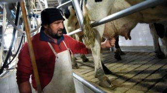 Persisten los problemas en el sector lácteo