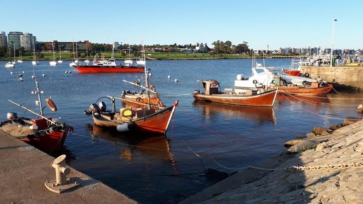 La pesca artesanal aparece en la bahía de Pocitos