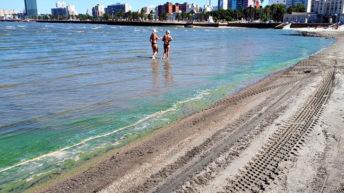 Entre cianobacterias y peces muertos, ¿cómo está trabajando la Unidad de Calidad del Agua de la IM?