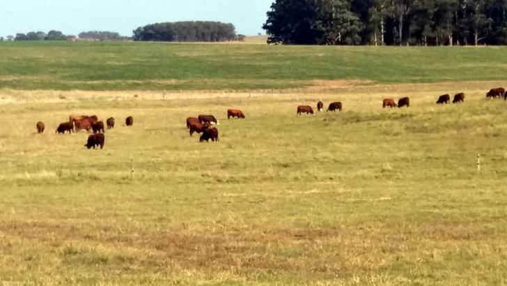 <em>Conexión Interior</em>: ¿Han aumentado los robos de ganado últimamente?