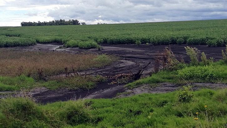 <em>Conexión Interior</em>: Pesticidas afectan a peces del Río Negro y el Uruguay