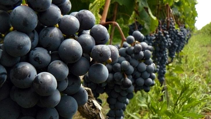 <em>Conexión Interior</em> con Manuel Filgueira: «El vino es una compañía, esa es su verdadera magia»