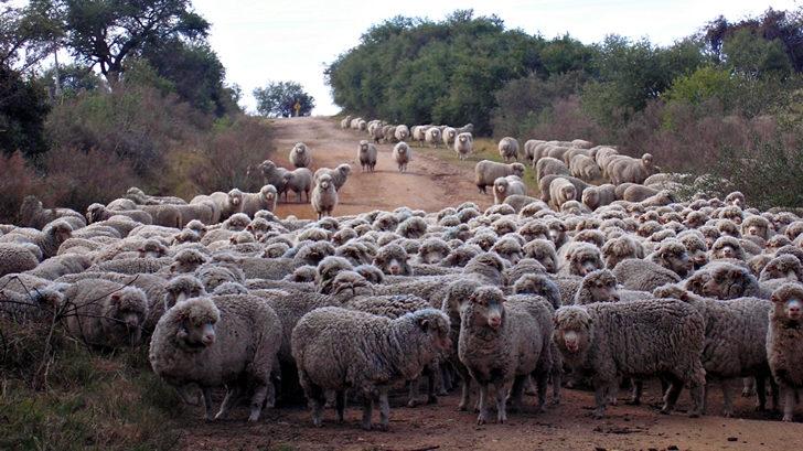 <em>Conexión Interior</em>: Central Lanera y el negocio de la lana uruguaya