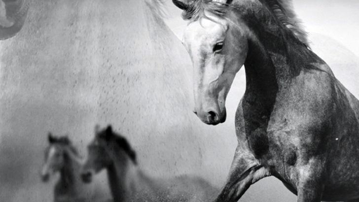 <em>Amparo y el galope de los caballos muertos</em>, de Guillermo Álvarez Castro
