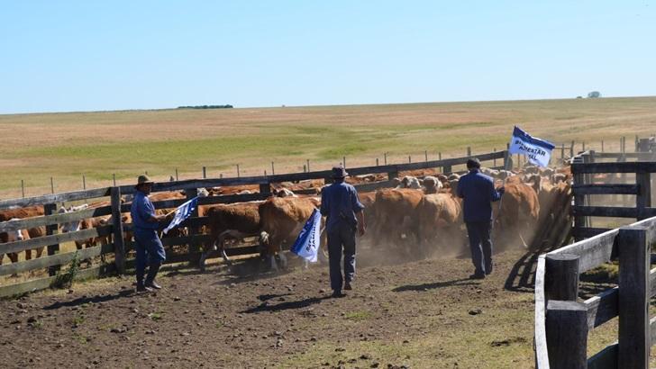El bienestar animal en la producción ganadera