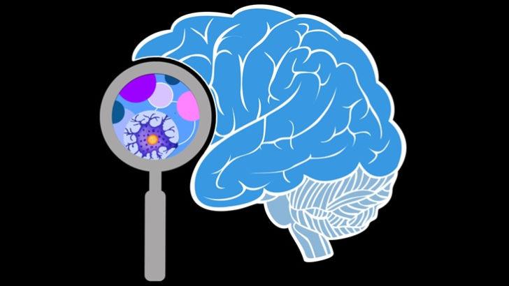 Rafael Yuste, del proyecto BRAIN: «Vamos a poder acceder científicamente a toda la información de la mente, para bien y para mal»