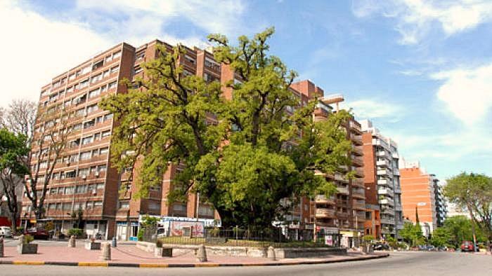 Montevideo Verde: el arbolado público y patrimonial de la ciudad (Paisaje-Ciudad T02P22)