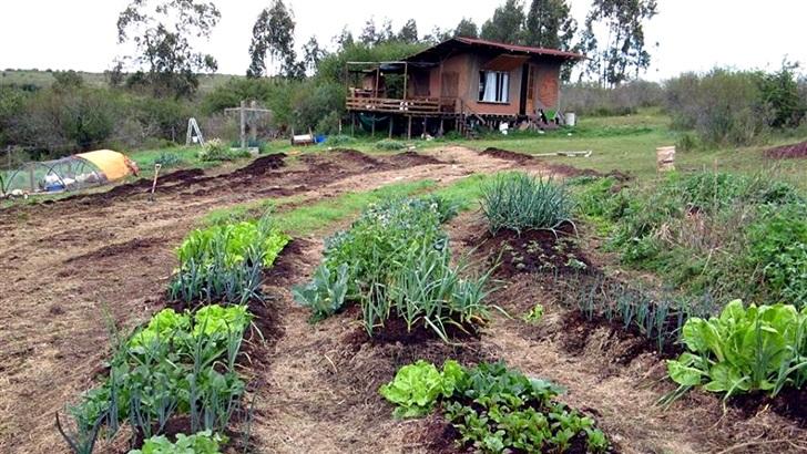 <em>Conexión Interior</em>: Ganadería y agricultura regenerativas, un nuevo paradigma