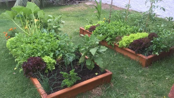 <em>Conexión Interior</em>: un ejemplo de huertas familiares que ayudan a generar conciencia agropecuaria y mejorar la calidad de la alimentación en el país