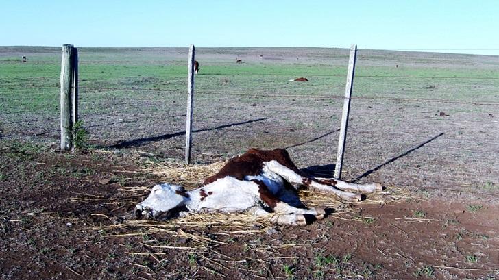 ¿Cómo afecta la sequía al rubro ganadero?