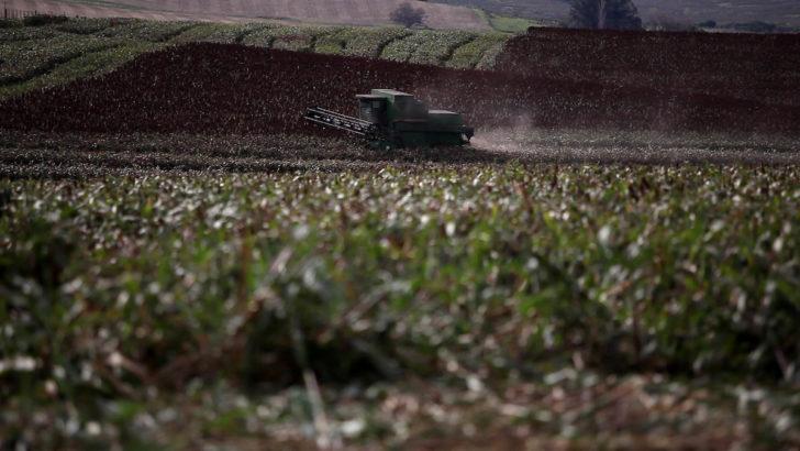 ¿Cómo está cerrando la zafra de soja 2019-2020?