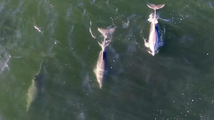 <em>Los ojos de la radio:</em> Delfines y pingüinos avistados en la costa de la Playa Brava en Punta del Este