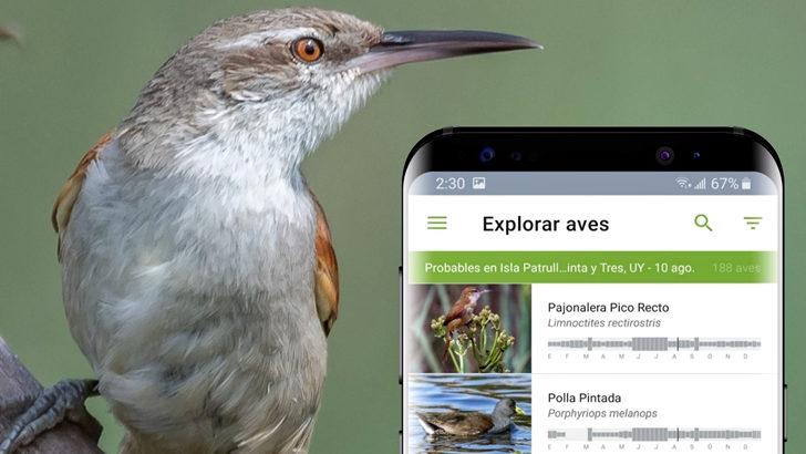 Merlín: Una App para el reconocimiento de aves